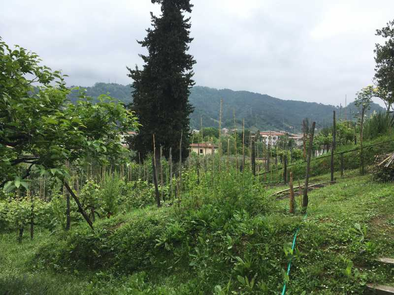villa singola in vendita a carrara bonascola foto2-100130850