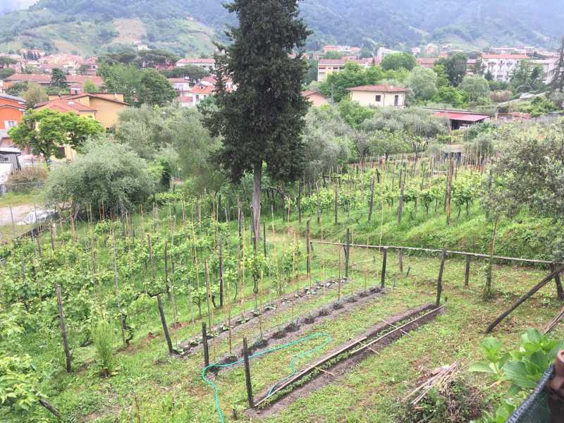 villa singola in vendita a carrara bonascola foto3-100130850