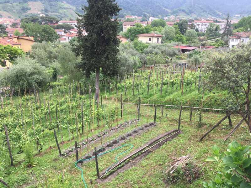 villa singola in vendita a carrara bonascola foto4-100130850