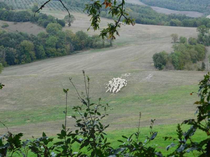 terreno agricolo in vendita a murlo