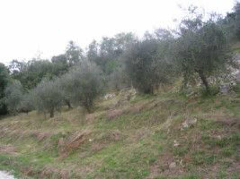 terreno agricolo in vendita a camaiore camaiore silerchie foto1-14638477