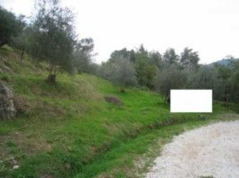 terreno agricolo in vendita a camaiore camaiore silerchie foto2-14638477