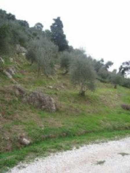 terreno agricolo in vendita a camaiore camaiore silerchie foto4-14638477