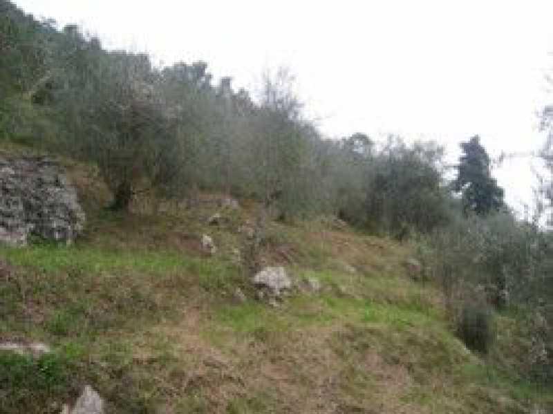 terreno agricolo in vendita a camaiore camaiore silerchie foto5-14638477