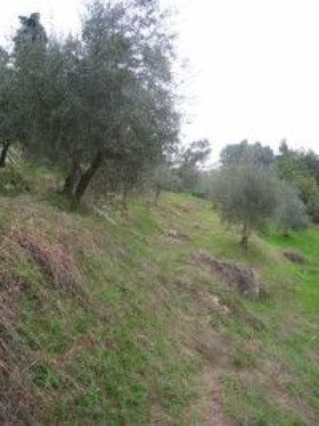 terreno agricolo in vendita a camaiore camaiore silerchie foto6-14638477