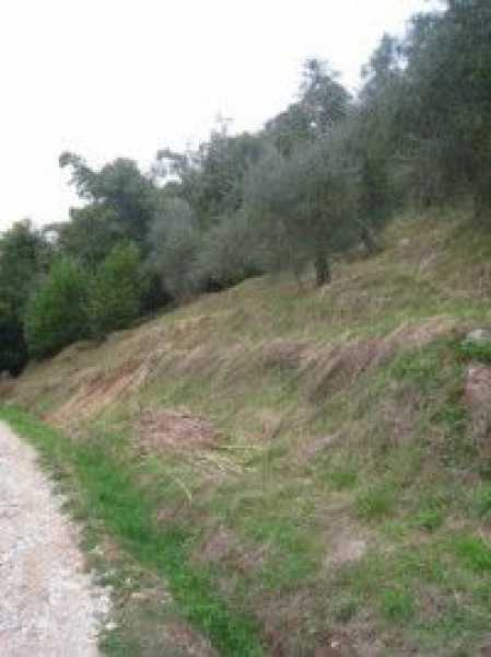 terreno agricolo in vendita a camaiore camaiore silerchie foto7-14638477