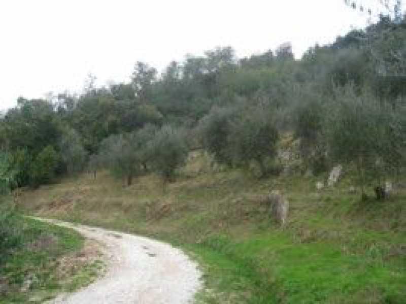 terreno agricolo in vendita a camaiore camaiore silerchie foto8-14638477