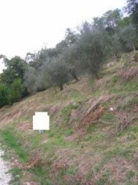 terreno agricolo in vendita a camaiore camaiore silerchie foto3-14638478