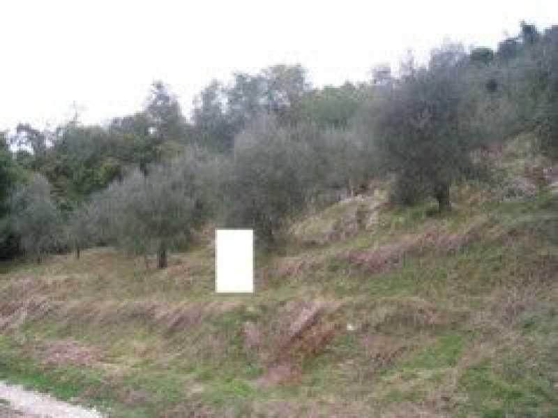 terreno agricolo in vendita a camaiore camaiore silerchie foto4-14638478