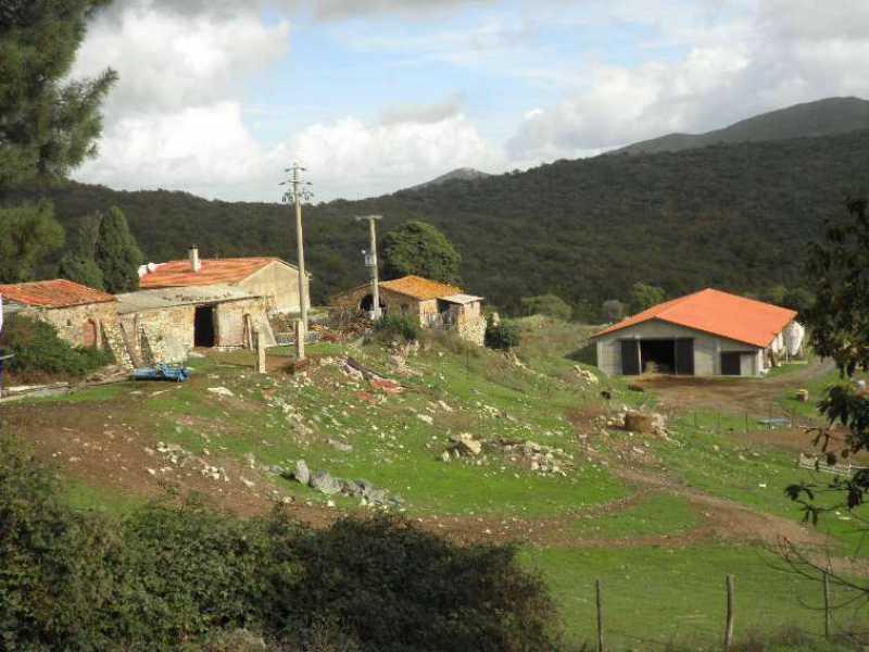 azienda agricola riparbella foto1-24505807