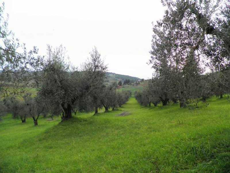 terreno agricolo in vendita rosignano marittimo 0 li foto1-40835042