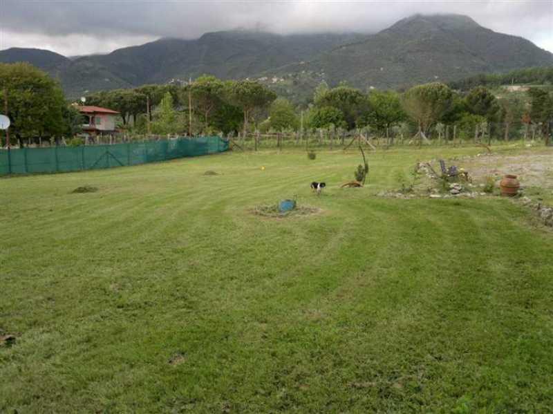 terreno agricolo in vendita camaiore foto1-50470144