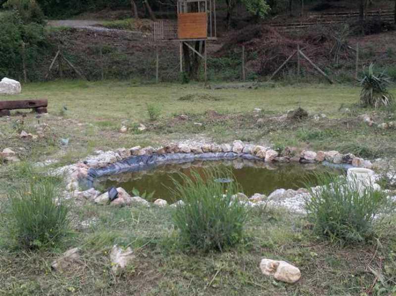 terreno agricolo in vendita a camaiore camaiore pontemazzori foto3-50470144
