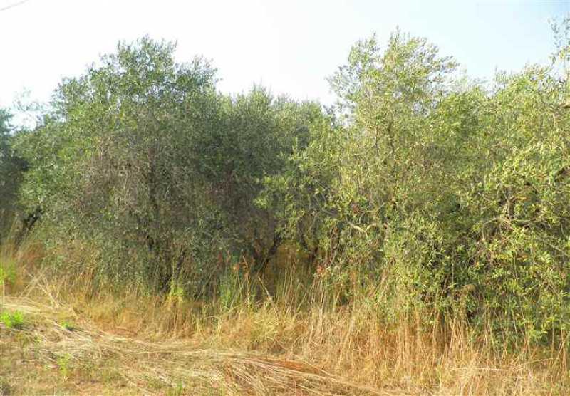 terreno agricolo in vendita rosignano marittimo 0 li foto1-54662190