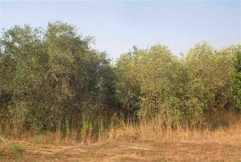 terreno agricolo in vendita a rosignano marittimo rosignano solvay foto2-54662190