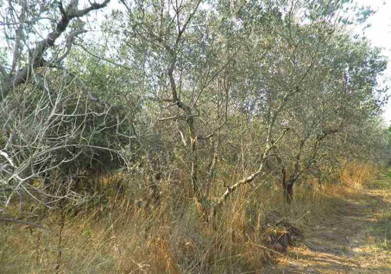 terreno agricolo in vendita a rosignano marittimo rosignano solvay foto3-54662190