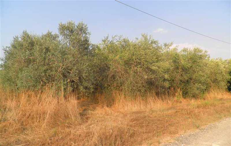 terreno agricolo in vendita a rosignano marittimo rosignano solvay foto4-54662190
