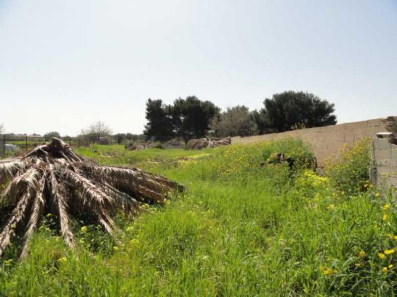 terreno agricolo in vendita a mola di bari foto2-55564958