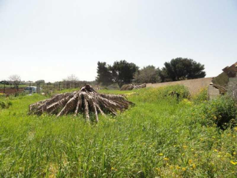 terreno agricolo in vendita a mola di bari foto3-55564958