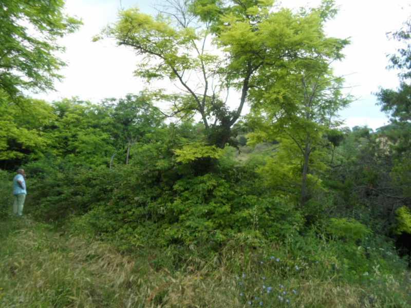 terreni san benedetto po foto1-57523351