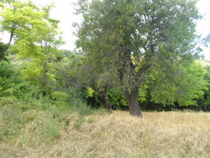 terreno in vendita a san benedetto del tronto panoramica foto3-57523351