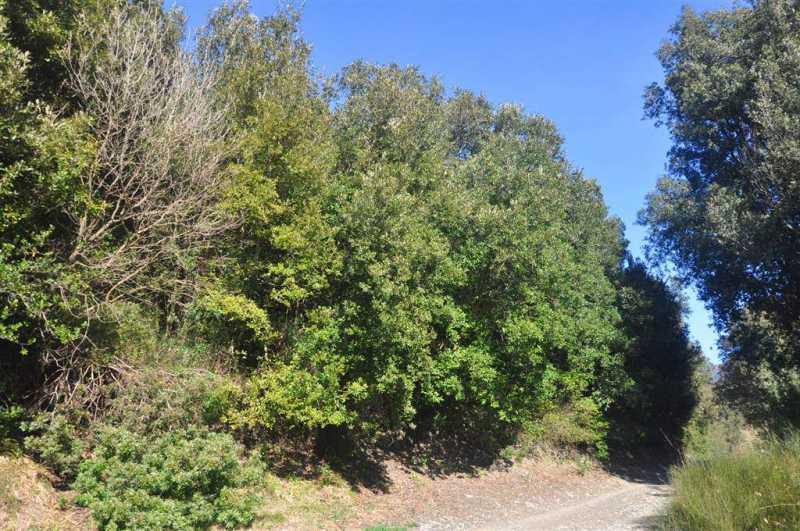 terreno residenziale castellina marittima foto1-72828428