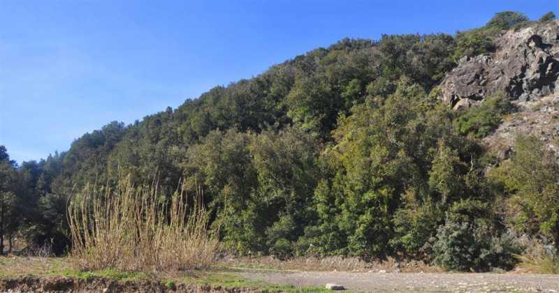 terreno agricolo in vendita a castellina marittima foto2-72828428
