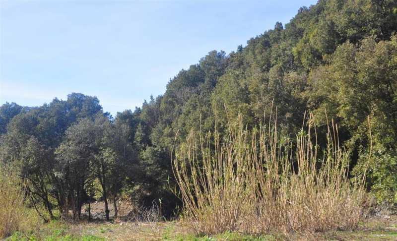 terreno agricolo in vendita a castellina marittima foto3-72828428