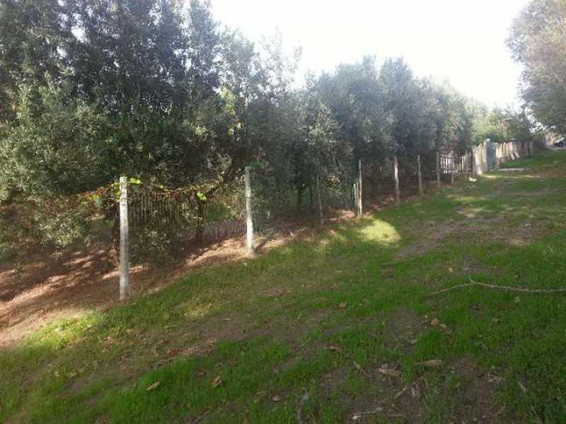 terreno agricolo in vendita a rossano mare fossa foto4-73196520