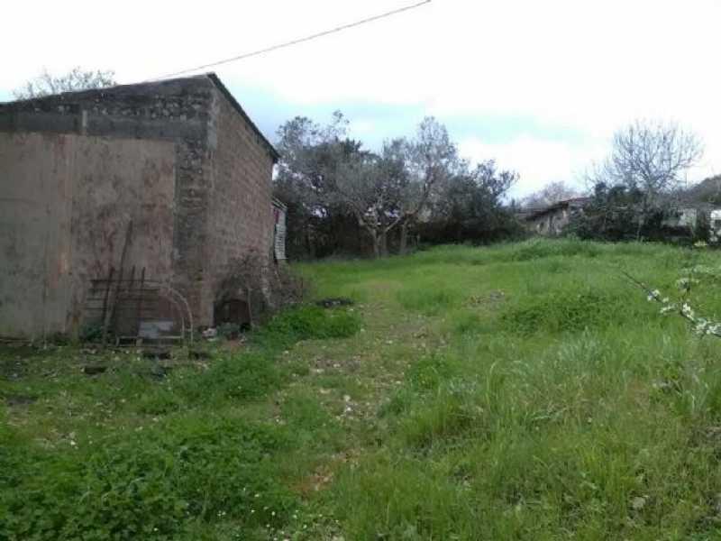 terreno agricolo in vendita a monte romano foto2-73233030
