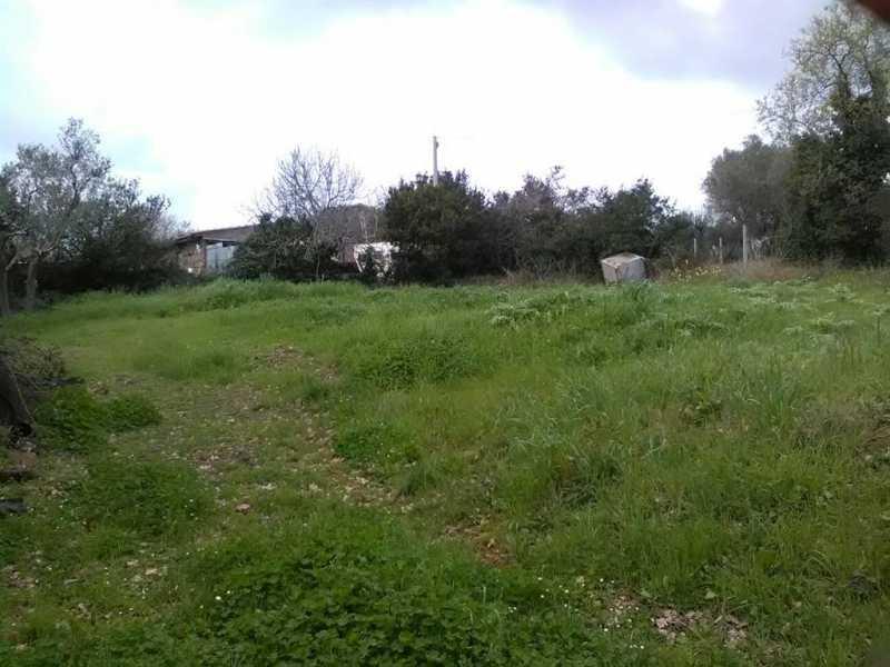 terreno agricolo in vendita a monte romano foto3-73233030