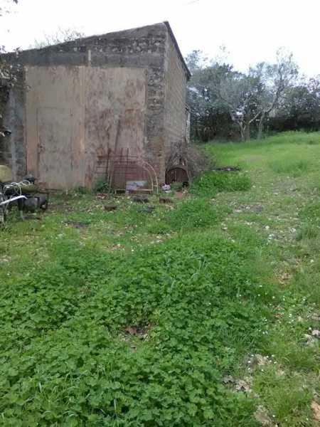 terreno agricolo in vendita a monte romano foto4-73233030