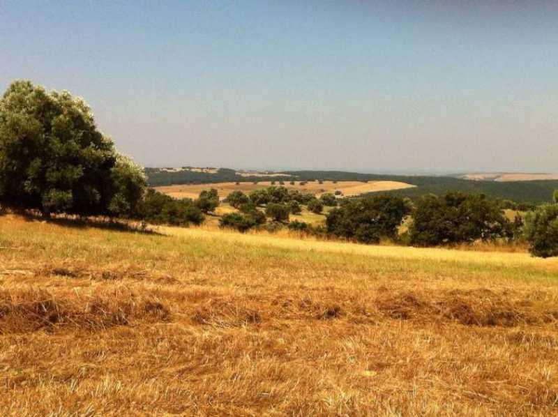 terreni monte romano foto1-73234320