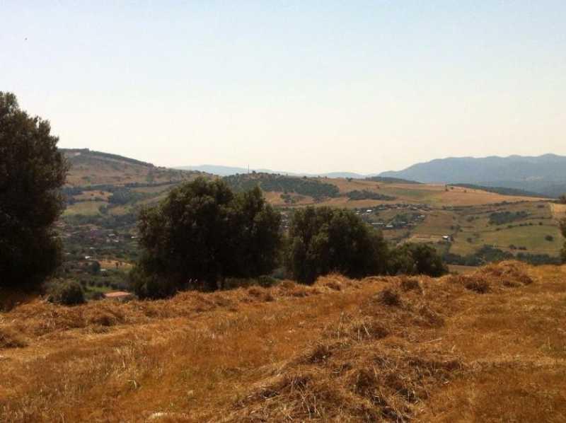 terreno agricolo in vendita a monte romano foto2-73234320