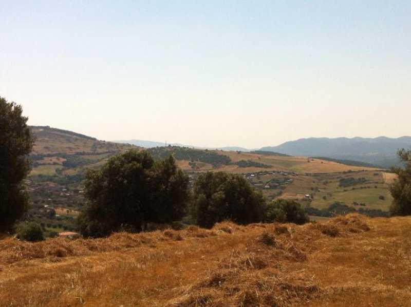 terreno agricolo in vendita a monte romano foto3-73234320