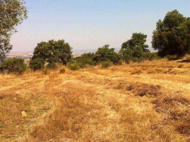 terreno agricolo in vendita a monte romano foto4-73234320