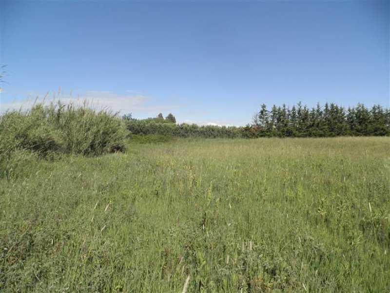 terreno agricolo in vendita a cecina foto2-73243355