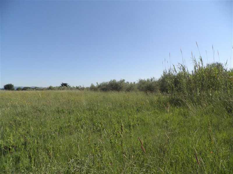 terreno agricolo in vendita a cecina foto3-73243355
