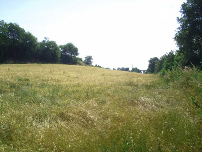 terreno agricolo vista mare marche foto1-74422479