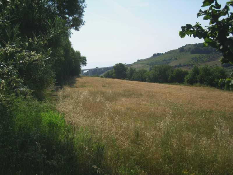 terreno in vendita a campofilone contrada rio canale foto2-74422479