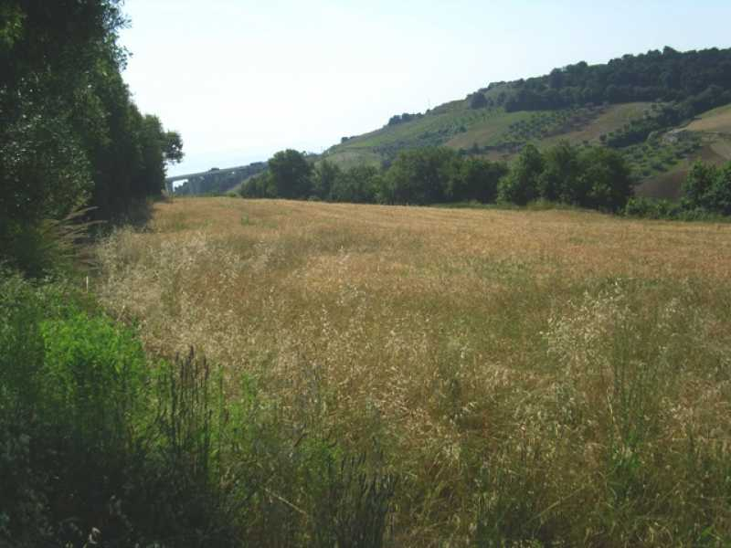 terreno in vendita a campofilone contrada rio canale foto3-74422479