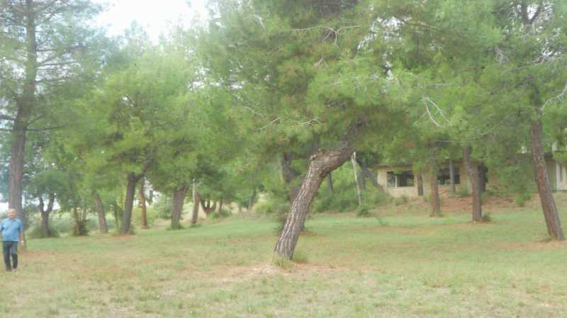 terreno in vendita a massignano contrada santa giuliana foto4-74426372