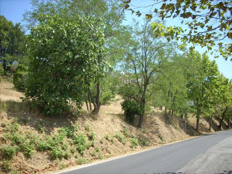 terreno edificabile in vendita teramo strada provinciale 18 foto1-74426406