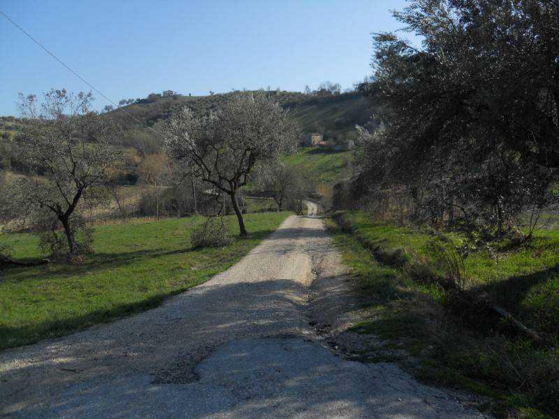 terreno agricolo controguerra foto1-74434830