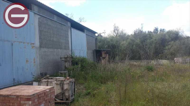 terreno in vendita a cittanova periferia foto3-76793646