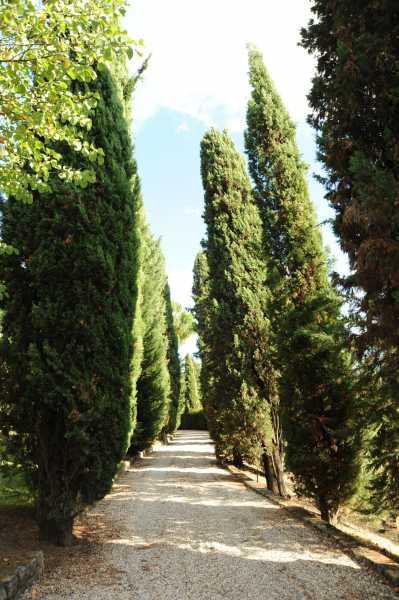 villa singola in vendita a montopoli in val d`arno foto3-89740623