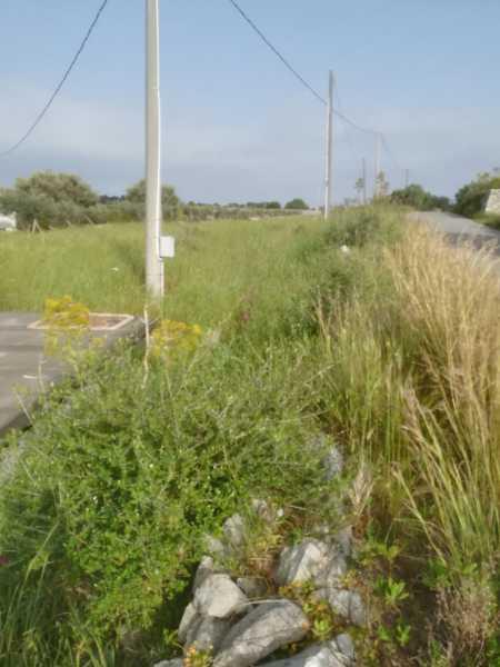 terreno in vendita a scicli fondo oliva foto2-91498412