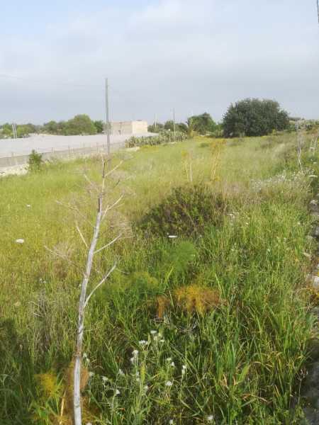 terreno in vendita a scicli fondo oliva foto4-91498412