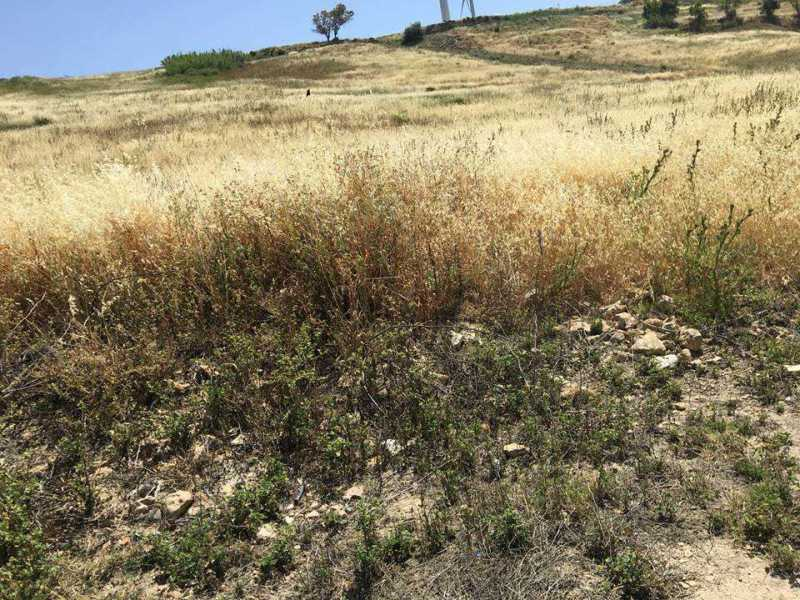 terreno agricolo in vendita ad agrigento periferia foto3-93398291