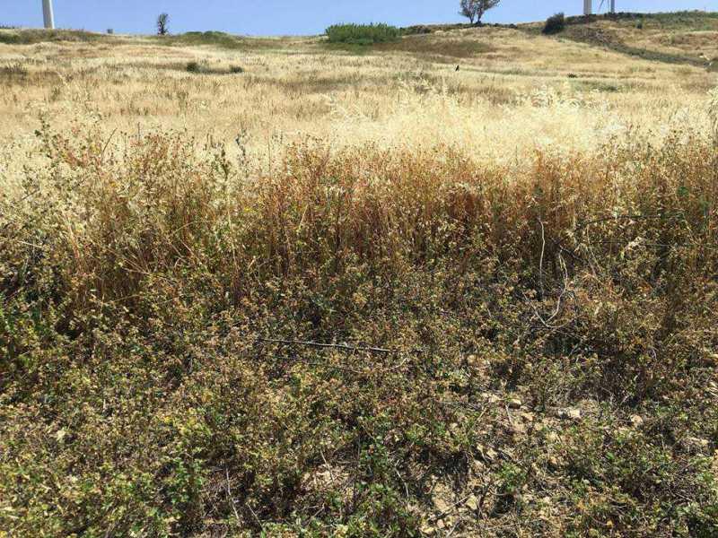 terreno agricolo in vendita ad agrigento periferia foto4-93398291